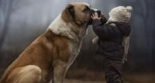 Evcil Hayvanlar Çocukların Endişelerini Ortadan Kaldırıyor